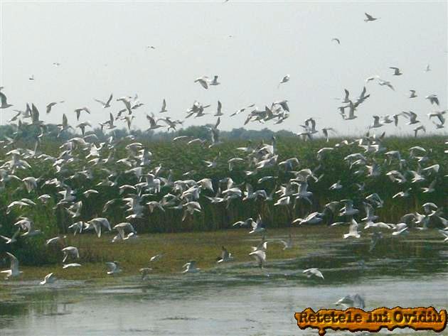 delta dunarii- www.papamond.ro