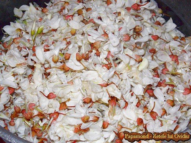 dulceata din flori de salcam 2