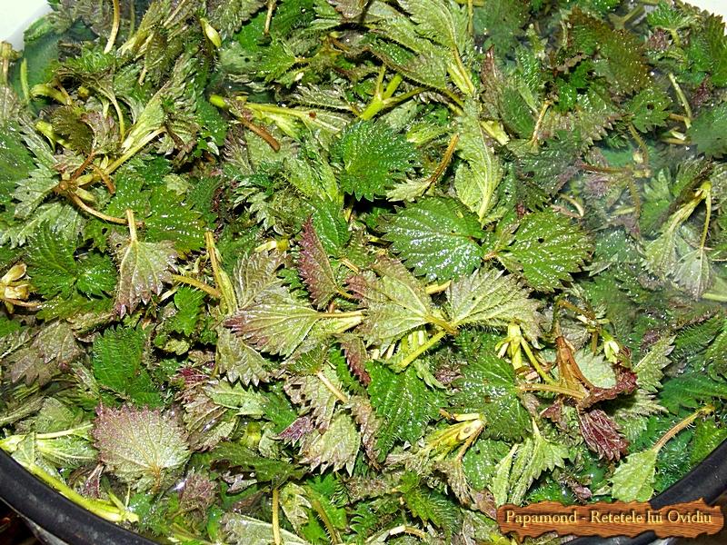 Piure de urzici cu brocoli. Cu piept de pui pe gratar 1